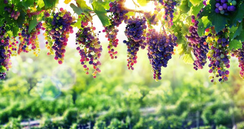 The Low-hanging Fruit of Treasury Management